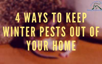 4 Ways To Keep Winter Pests Out of Your Home